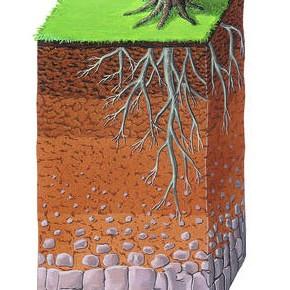 Degradazione e rigenerazione del suolo.