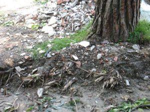 farsi cadere un albero in testa - Radici strappate