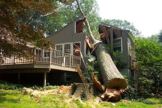 Abbattere un albero è una scelta difficile
