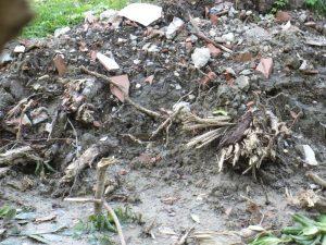 farsi cadere un albero in testa - radici strappate-2