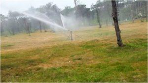 distruggere pinete in Versilia - irrigazione