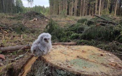Il legname del bosco è energia rinnovabile? – 2 –
