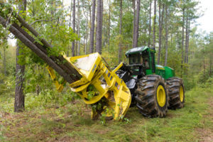 tagliare boschi