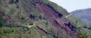 taglio dei boschi