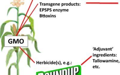 OGM, sostenibilità e mistificazione/2