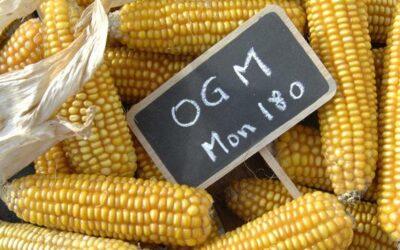 OGM, sostenibilità e mistificazione/3